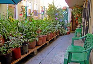 Desain Taman Minimalis di Lahan Sempit Samping Rumah